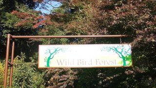 印旛沼サンセットヒルズ 野鳥の森