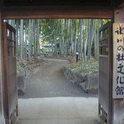 見事な竹林の小道