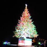 海に浮かぶクリスマスツリーとイルミネーション