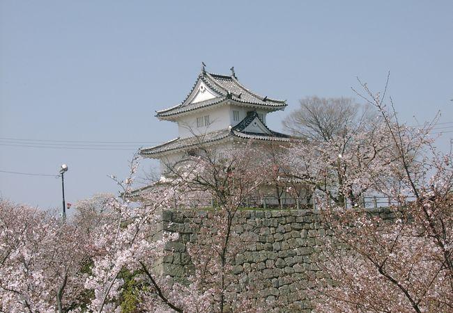 祭りの開催されている丸亀城南口の亀山公園だけでなく山全体が桜色で染まります