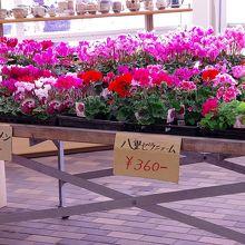 店内に陳列された花の様子です。