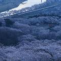 山裾を覆い尽くす桜並木と寝台特急