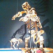 化石や恐竜がいっぱい