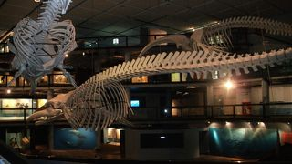 南アフリカ博物館