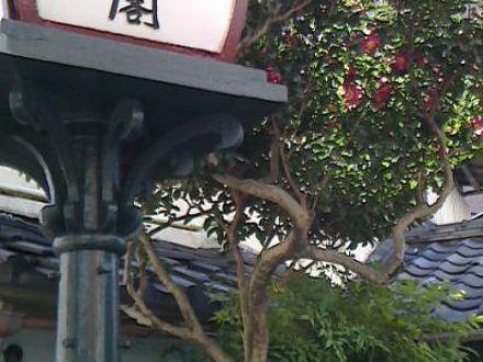 熱海温泉 龍宮閣 写真