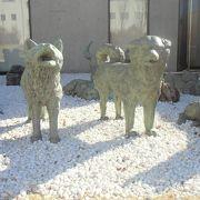 「南極物語」の犬たち
