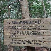 立派な大杉と原生林が残る自然の宝庫