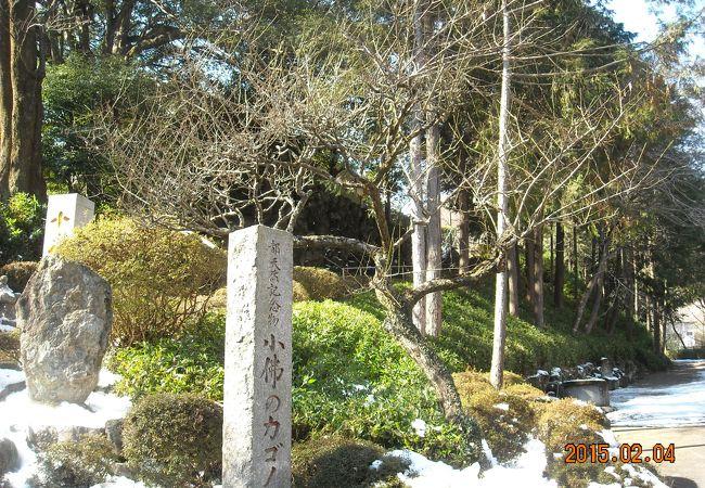 小仏のカゴノキ (宝珠寺)