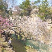 梅の庭園・天気次第では富士山も!