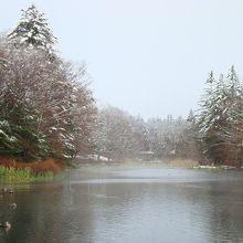 冬  11月下旬