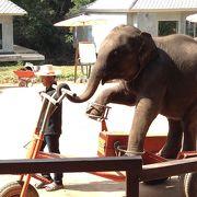 象さんのショーは楽しい