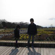 花がきれいな公園