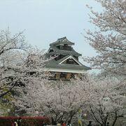 桜とお城は、やはり絵になります。
