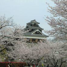 桜が彩る城の建物っていいですよね