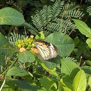 蝶が飛び交う道を行くと、アイヤル浜
