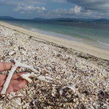 サンゴの「かけらも多い。