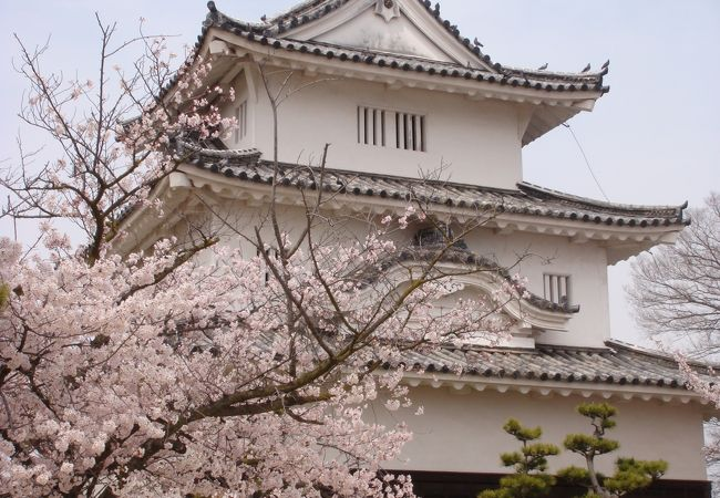 桜ごしの天守にうっとり