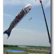 加須市民平和祭(ジャンボ鯉のぼり遊泳)