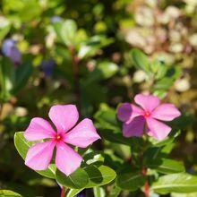 綺麗な花がアチコチにね