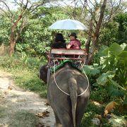 平地での象トレッキングでした