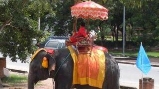 アジア象とアユタヤ遺跡巡り