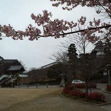 早桜の咲いている三の丸広場です。
