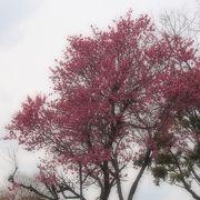 梅や桜の時期はいいね。