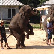 象さんのショーと首長族