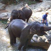 早めに行かないと象に乗れません
