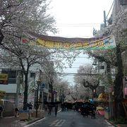 歩きがいのある桜並木