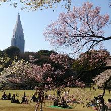 桜の時期は混雑しますが、広い敷地なので意外とゆっくりできます。