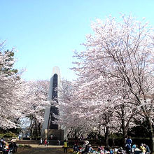 公園スペースでは花見(宴会)も可能