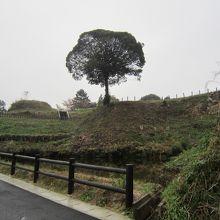軍用大井戸脇の池と侘しげな立木。