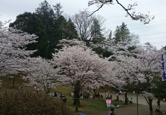 宇都宮市内の桜の名所