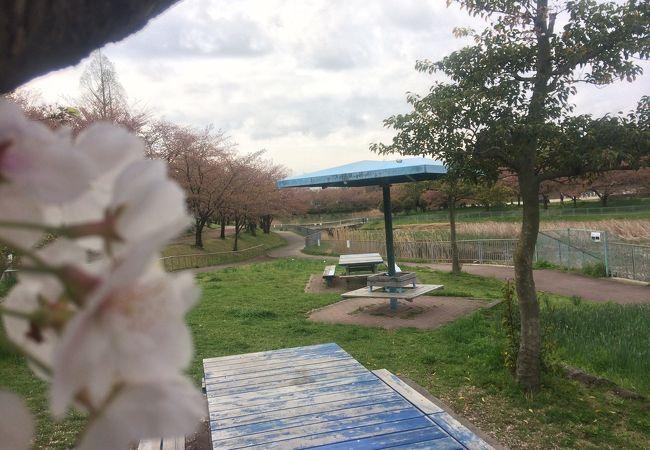 花見の穴場