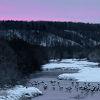 冬のタンチョウ写真のメッカ
