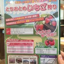 イチゴとトマト狩りが