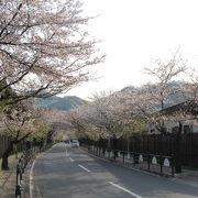 長瀞北桜通り・桜並木