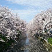 桜好きにはたまらない祭