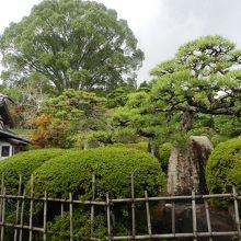 立派な庭園でした〜!