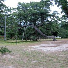 みごとに手入れされた松並木が続きます