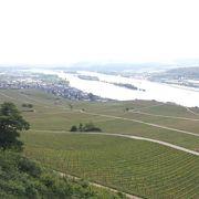 ワイン畑とライン川が広大で見ないともったいない!