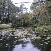 旧家の庭園