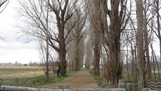 並木道を歩けます