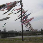 歴舟川清流鯉のぼり