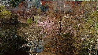 北海道にも春が来ました