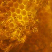 本物のハチもいらっしゃります