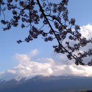 富士山と桜を見ることができました