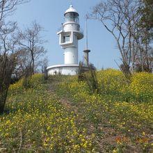 これが豆酘崎灯台(現役)、黄色い花で埋め尽くされて・・・