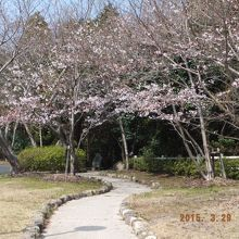 これぞ春爛漫、この奥に美女塚の碑が見えます